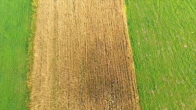 Flight Over Meadow 13