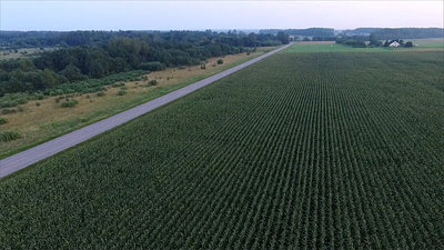 Flying Over The Corn Field Near Road, Cars Passing By