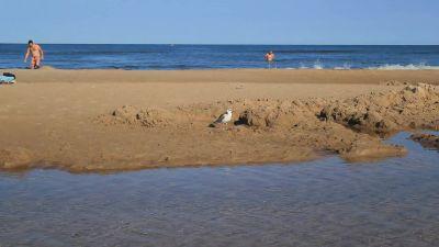 Gull On The  Beach