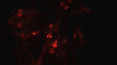 Light Leaks Element 194
