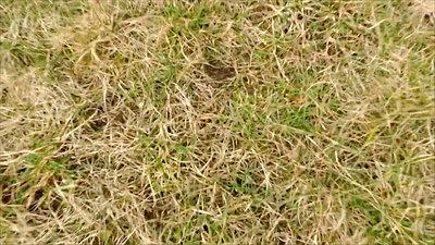 Landing On A Grass Field