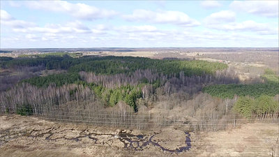 Aerial View Over The Forest 3