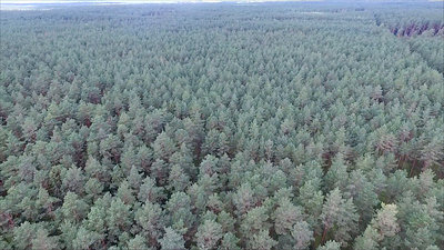 Aerial View Over The Forest 7