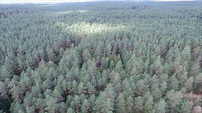 Aerial View Over The Forest 10