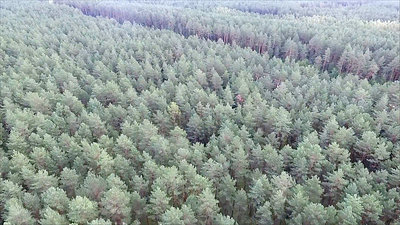 Aerial View Over The Forest 14