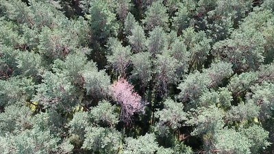 Aerial View Over The Forest 16
