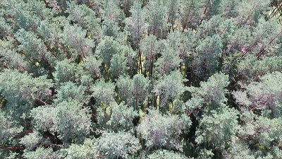 Aerial View Over The Forest 17