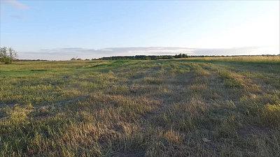 Landing On A Meadow 1