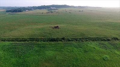 Flight Over Cows In Meadow 1