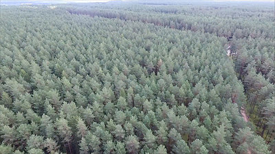 Flight Over The Forest Near Gravel Road 7