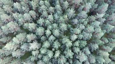 Vertical Flight Over The Forest 4