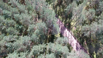 Flight Over The Forest And Gravel Road 1