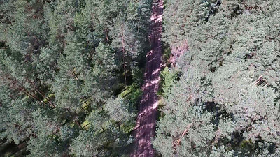 Flight Over The Forest And Gravel Road 2