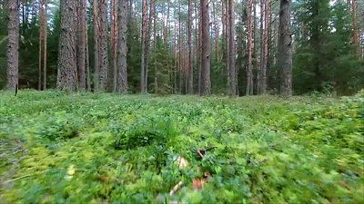 Low Flight Between Trees In Forest 1
