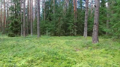 Low Flight Between Trees In Forest 3